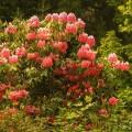 blooming_park