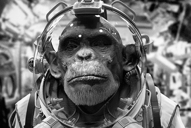 monkey_astronaut