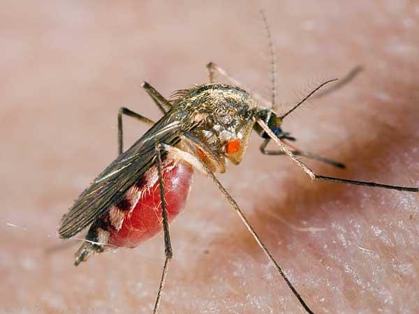 500 000 укусов за раз, но вряд ли на вас накинется пол миллиона комаров, а средства от комариных укусов гораздо опасней самих комаров.