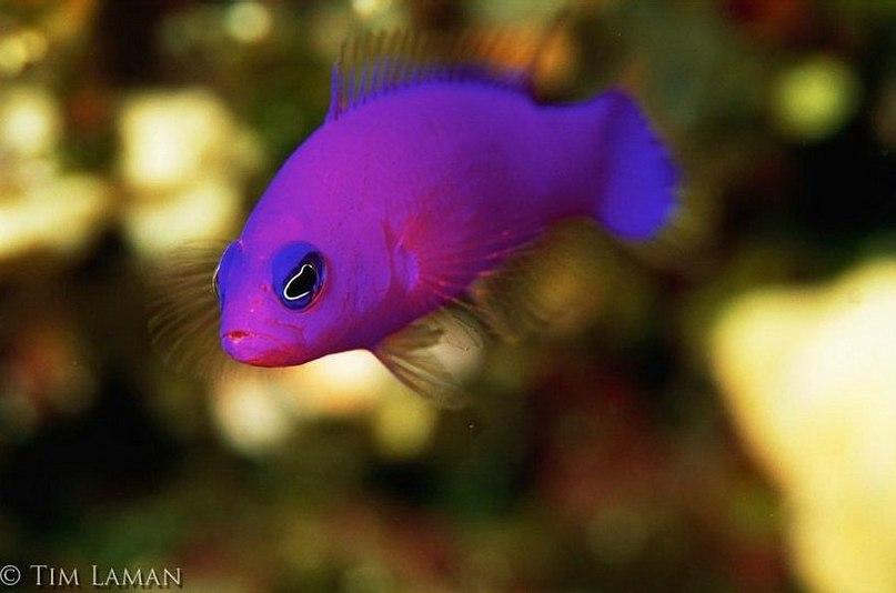 Подводная жизнь | Фотографии экзотических рыб