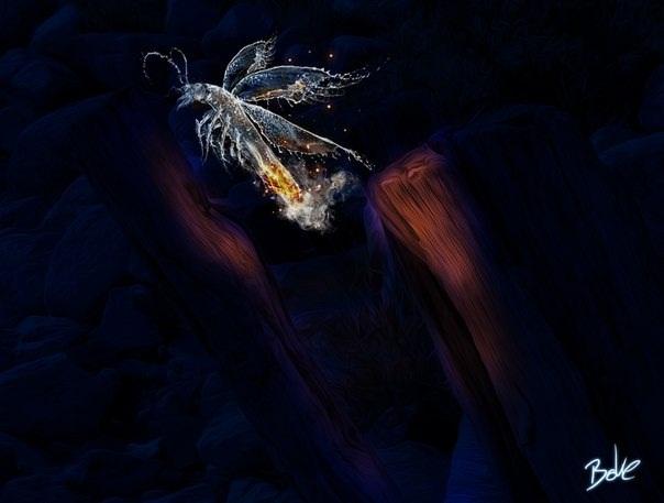 Фотограф и художник из Германии, который именует себя давольно странным псевдонимом«B-O-K-E», использует в своих работах уникальное сочетание воды, льда и огня.