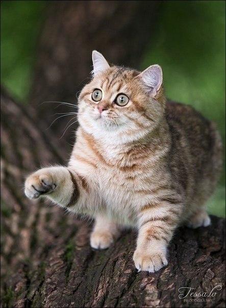 Красивая кошка или кот играется на дереве. Фотограф — Jessa.W.
