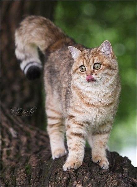 Красивая кошка или кот играется на дереве.