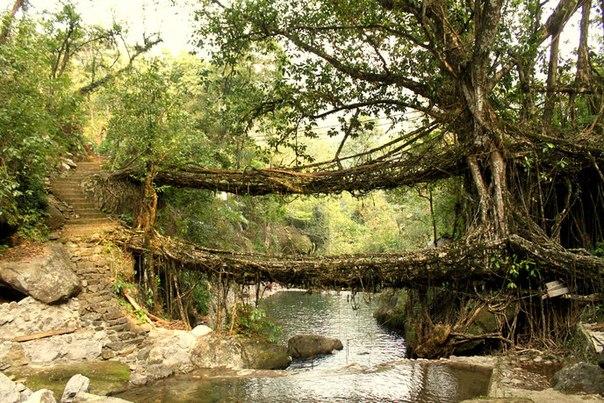 Миру известны мосты, сделанные таким способом, которые могут выдержать 50 человек одновременно