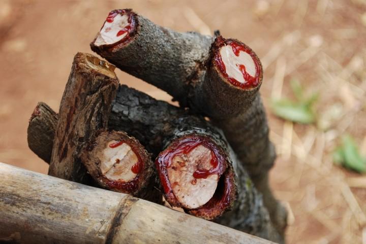 Древесина прочная и часто используется в качестве отделочного материала.