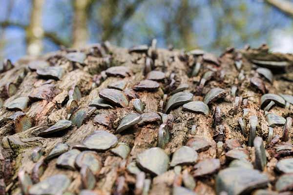 Другие считают, что количество монет вставленныхчеловеком в дерево, может привести его куспеху в семейной жизни и принестидетей.