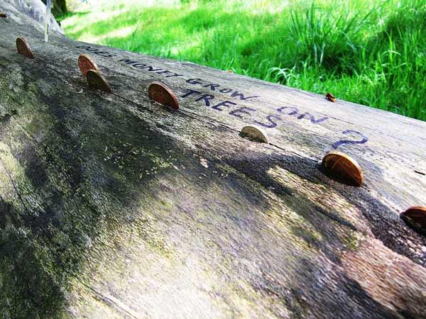 По всей Великобритании можно найти массу такие деревья с монетками.