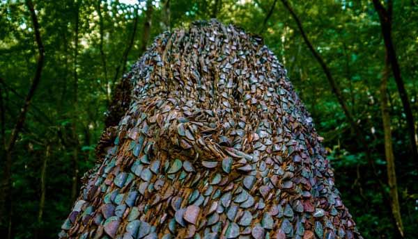 derevo-v-anglii-v-monetah