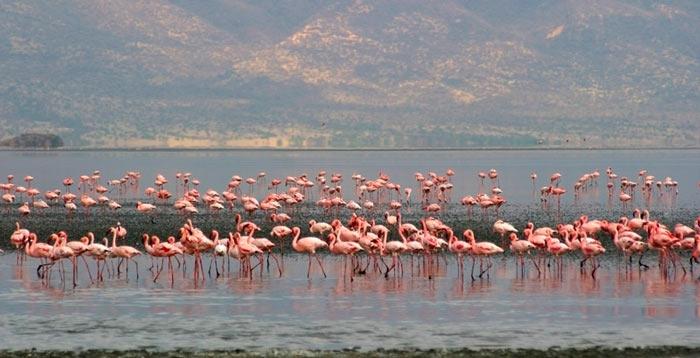 Фотограф Ник Брандт в своей новой книге пишет, что окаменевшие существа вокруг озера сохраняются благодаря постоянному рН от 9 до 10,5.