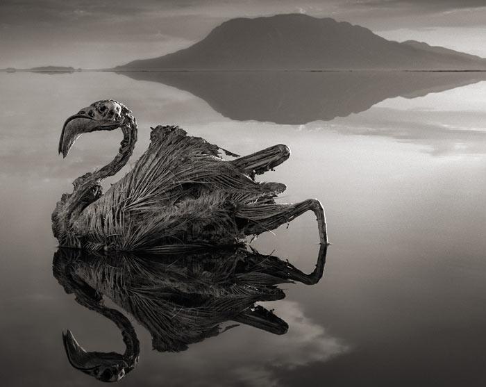 Редкое явление вызвано химическим составом озера, который оставляет после себя окаменелые существа, как из фильма ужасов.