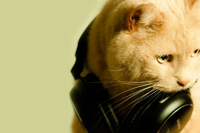 Ученые создали музыку для кошек