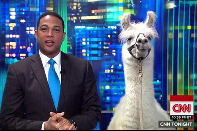 В качестве эксперта на канале CNN появилась лама