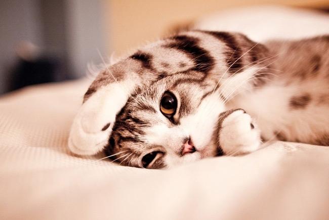 В Великобритании откроется отель-люкс для котов