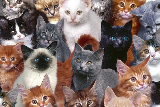 Кошачий остров в Японии: шесть кошек на одного жителя