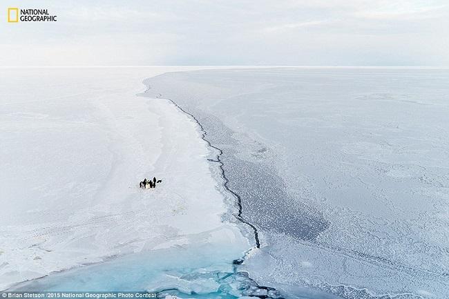 Небольшая группа императорских пингвинов «вступает в сговор» на краю морского льда в море Росса
