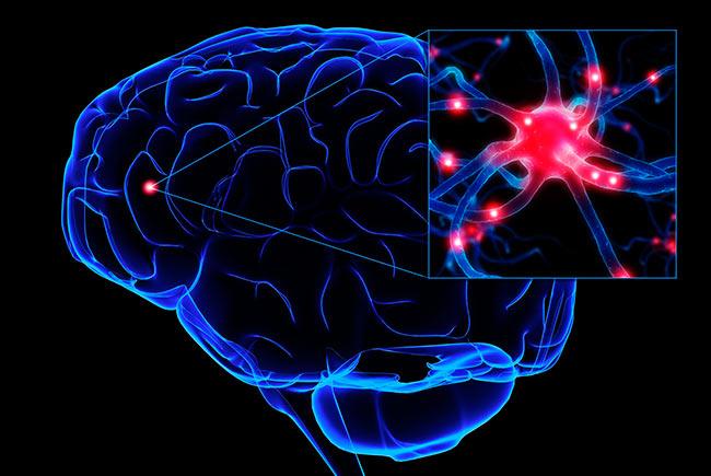 У успешных людей одинаково работают мозги