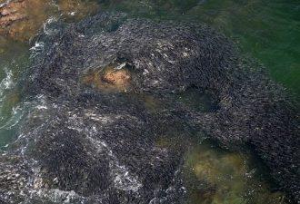 Огромные скопления рыб