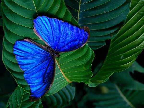Топ-10 удивительных и необычных бабочек