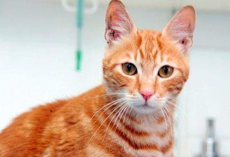 Котенок совершил 17-девное путешествие из Египта в Англию без воды и пищи