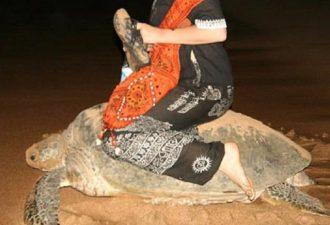 Американка арестована за катание на морской черепахе