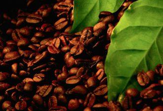 Ученые нашли морфин в кофе