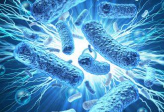 В природе существуют микроорганизмы, которые питаются электричеством