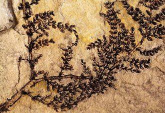 Родиной первых цветов на Земле были пресные водоемы