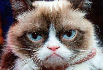 В музее Мадам Тюссо впервые появится восковая фигура кота