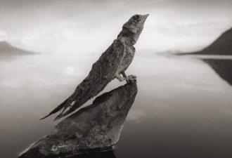 Мёртвое озеро Танзании