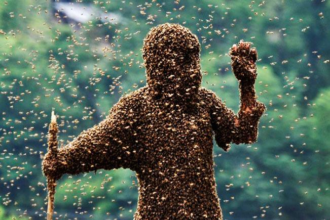 Пчелы-убийцы угрожают жителям Калифорнии