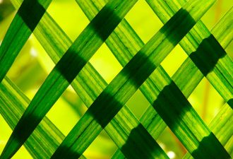 Искусственный фотосинтез в ближайшем будущем может заменить нефть и газ