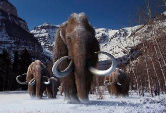 В Якутии начала работу лаборатория по клонированию вымерших животных