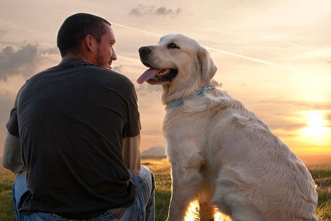 Названы 5 животных, способных лечить людей