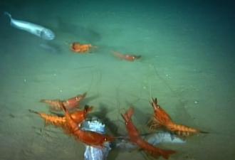 Жители глубин океана: новые снимки