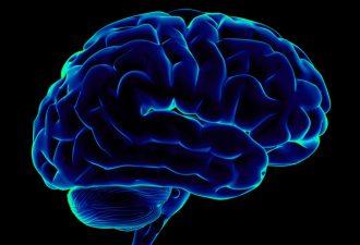 Названы пять привычек, которые убивают мозг