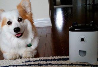 На производство «первого смартфона для домашних животных» собирают деньги в интернете