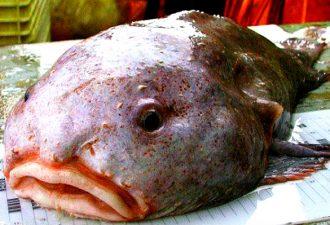 Рыба капля фото