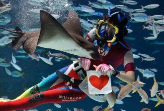 В Японском аквариуме дарят рыбам валентинки