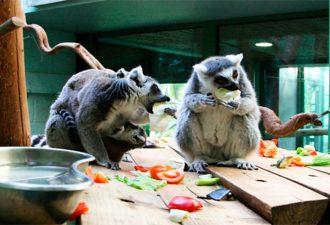 В Великобритании открылся первый отель в зоопарке