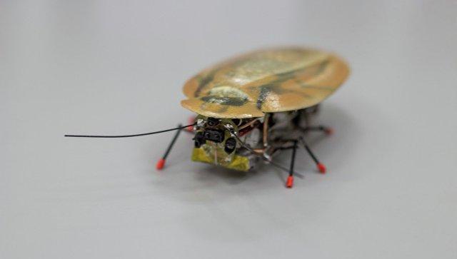 Заявление о создании робота-таракана сделала директор балтийского федерального университета им. Канта