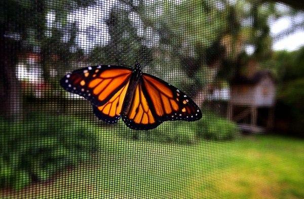 Появление на свет бабочки