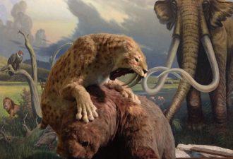 Саблезубого тигра и мамонта уничтожил человек
