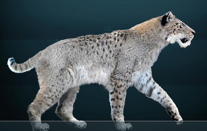 Homotherium - вымерший род магародонтиновых саблезубых кошек