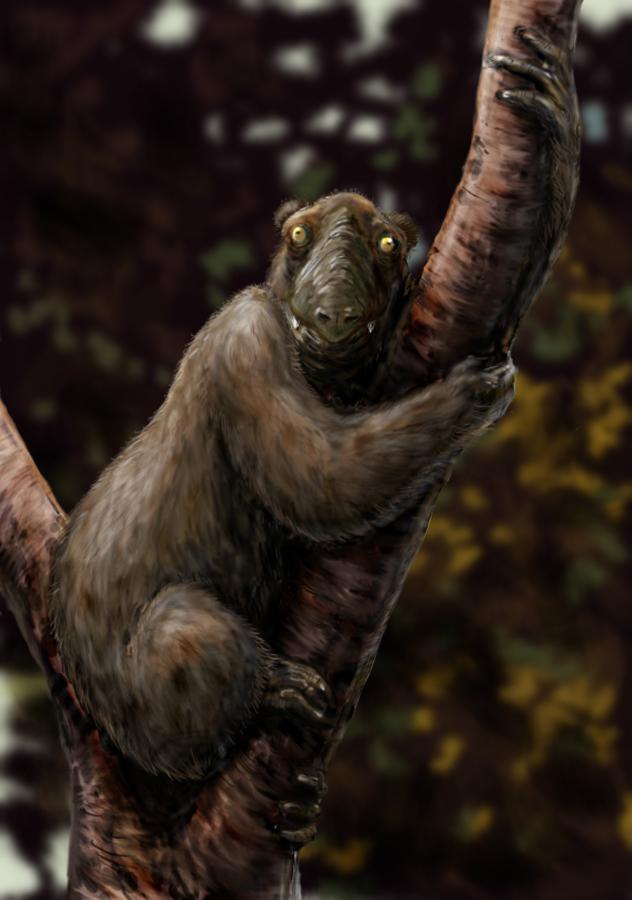Megaladapis, известный как коала лемур