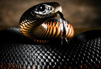 10 самых ядовитых змей в мире