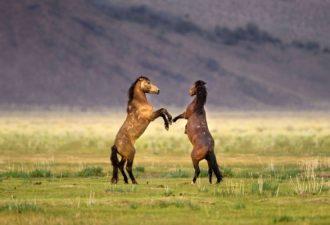 Удачный ракурс: фотографии животных