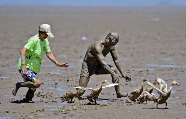 Соревнования по улавливанию уток в морской грязи