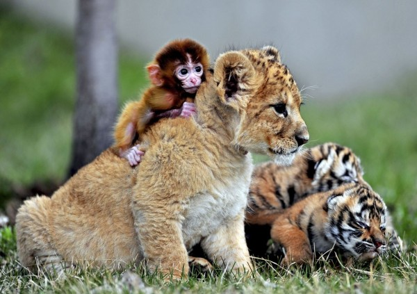 В зоопарке города Шэньян, Китай
