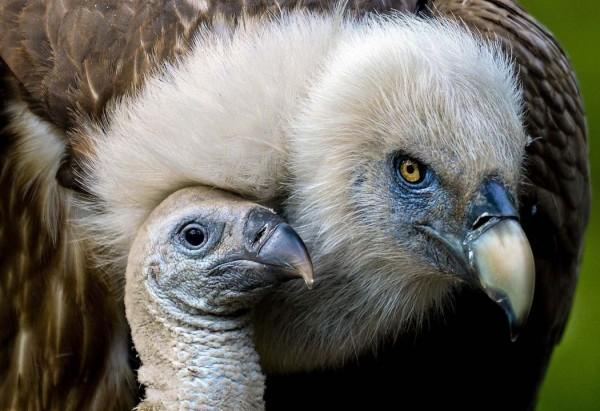 В зоопарке  Дуйсбурга, Германия.