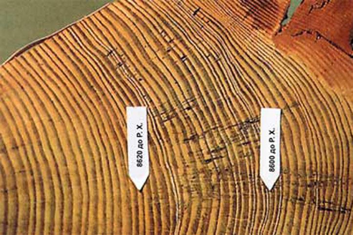 Дендрохронология - наука посвященная исследованию годичных колец древесины
